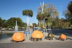 Campioni delle zucche giganti Fotografia Stock Libera da Diritti