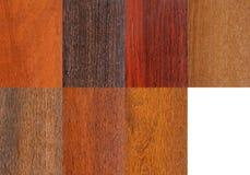 Campioni di legno messi Immagine Stock