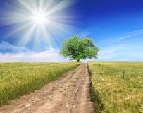 Campo, árbol, cielo azul con manera Foto de archivo libre de regalías