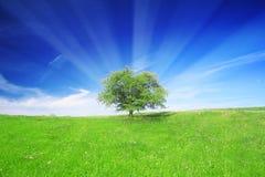 Campo, árbol y cielo azul Foto de archivo libre de regalías