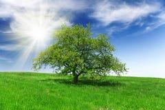 Campo, árbol y cielo azul Foto de archivo
