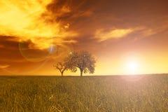 Campo, árboles, puesta del sol Imagen de archivo
