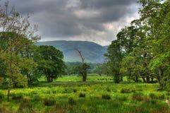 Campo, árboles y cielos tempestuosos Foto de archivo