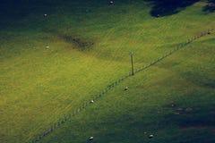 Campo Fotografia Stock Libera da Diritti