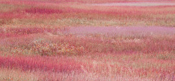 Campo Imagen de archivo libre de regalías