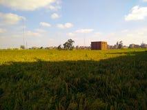 Campo Fotografia Stock