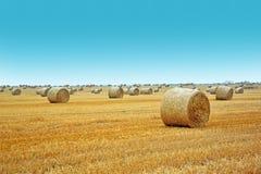 Campo Imagem de Stock
