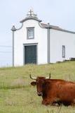 Campo - Açores Fotografia de Stock Royalty Free