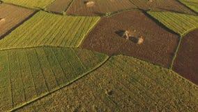 Campo aéreo do arroz da ceifeira vídeos de arquivo