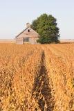 Campo abandonado del granero y de la soja Imagenes de archivo