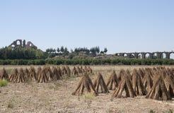 Campo agrícola Fotos de archivo