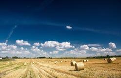 Campo agrícola Imagens de Stock Royalty Free