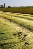Campo agrícola Foto de archivo libre de regalías