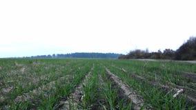 Campo agrícola Argumentos agrícolas granjeros metrajes