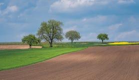 Campo agrícola bonito foto de stock royalty free