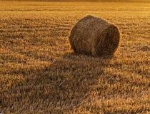 Campo agrícola com pacotes da palha Foto de Stock
