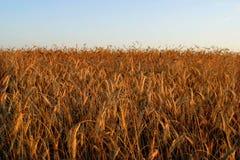 Campo agrícola del otoño Imagen de archivo libre de regalías