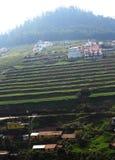 Campo agrícola do chá com casas Imagem de Stock