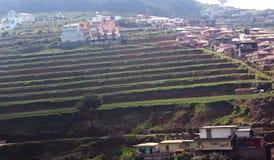 Campo agrícola do chá com casas Fotografia de Stock