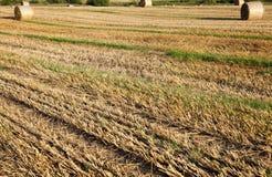 campo agrícola do restolho foto de stock
