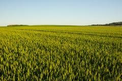 Campo agrícola en Croacia Foto de archivo libre de regalías