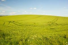 Campo agrícola en Croacia Fotografía de archivo libre de regalías