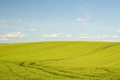 Campo agrícola en Croacia Imagenes de archivo