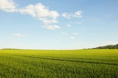 Campo agrícola en Croacia Fotografía de archivo