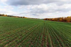 Campo agrícola en Europa fotografía de archivo