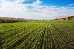 Campo agrícola en Europa foto de archivo