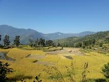 Campo agrícola fértil en las colinas de Nepal fotos de archivo libres de regalías