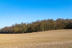 Campo agrícola na parte dianteira na cena da floresta do inverno em um dia ensolarado morno em fevereiro imagens de stock royalty free