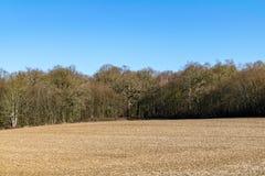 Campo agrícola na parte dianteira na cena da floresta do inverno em um dia ensolarado morno em fevereiro imagem de stock