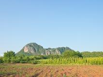 Campo agrícola no lado do monte Imagens de Stock Royalty Free