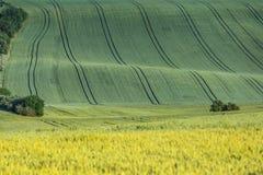 Campo agrícola ondulado Imágenes de archivo libres de regalías