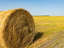 Campo agrícola Paquetes redondos de hierba seca en el campo contra el cielo azul cierre del rollo del heno del granjero para arri fotos de archivo libres de regalías