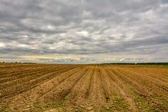 Campo agrícola plantado con las patatas Formado por el techniq Fotos de archivo libres de regalías