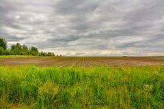 Campo agrícola plantado con las patatas Formado por el techniq Fotografía de archivo libre de regalías