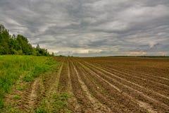 Campo agrícola plantado con las patatas Formado por el techniq Foto de archivo libre de regalías