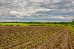 Campo agrícola plantado con las patatas Formado por el techniq Imágenes de archivo libres de regalías