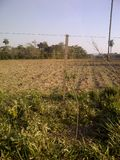 Campo agrícola, plantas verdes e árvores Fotografia de Stock Royalty Free