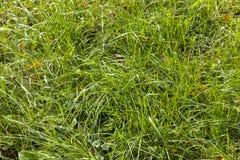 campo agr?cola con la hierba verde fotos de archivo