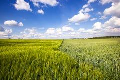 Campo agricolo Fotografia Stock