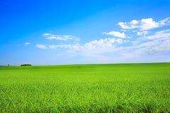 Campo agricolo Fotografie Stock