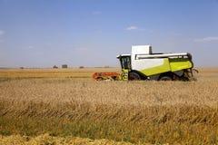 Campo agricolo cereali Fotografia Stock Libera da Diritti