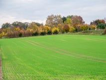 Campo agricolo circondato dagli alberi variopinti di autunno fotografia stock libera da diritti