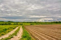 Campo agricolo coltivare con le patate Formato dal techniq Fotografia Stock