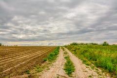 Campo agricolo coltivare con le patate Formato dal techniq Immagini Stock Libere da Diritti