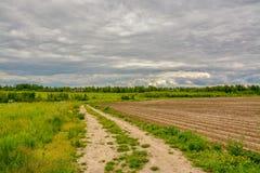 Campo agricolo coltivare con le patate Formato dal techniq Immagine Stock Libera da Diritti