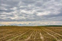 Campo agricolo coltivare con le patate Formato dal techniq Fotografia Stock Libera da Diritti